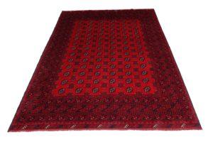Oriental-RedAfghan01